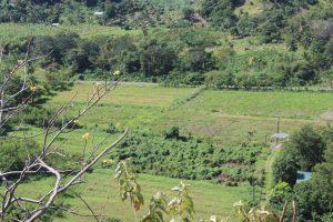 """Aussicht """"Sankofa Rainbow Roots Farm"""" auf die Spitze des Hügels"""