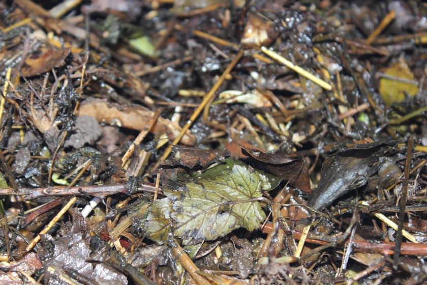 Zersetzung Kompostmaterialien noch nicht vollständig