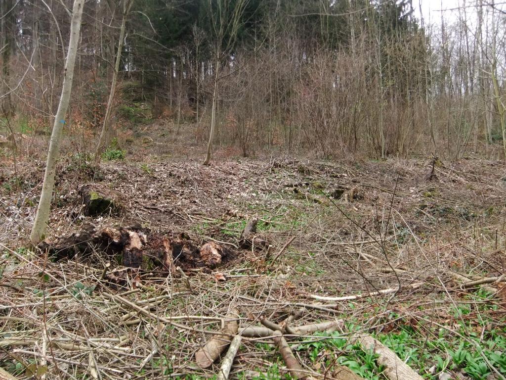 Abgeholter Wald in Zuerich-Altstetten