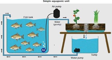 Aquaponik Kreislauf-Grafik
