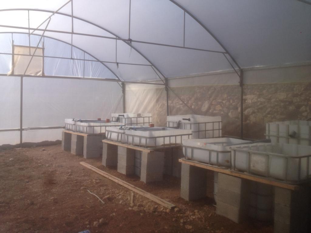 Aufbau der Aquaponik-Systeme in Palästina, Bethlehem
