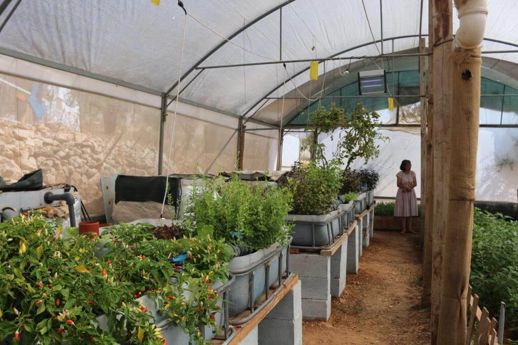 Neubepflanzung für die Aquaponik-Anlagen in Bethlehem-Palästina