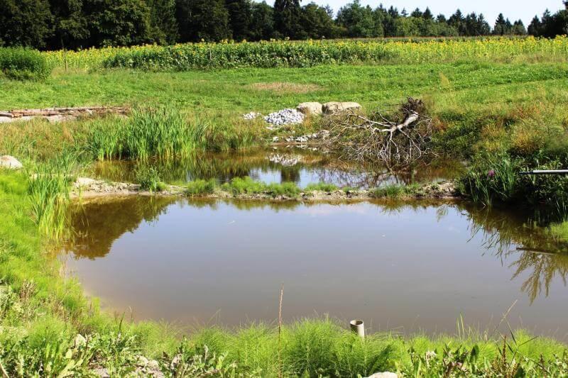 """Naturteich in der """"Bio-Gärtnerei Birchhof"""""""