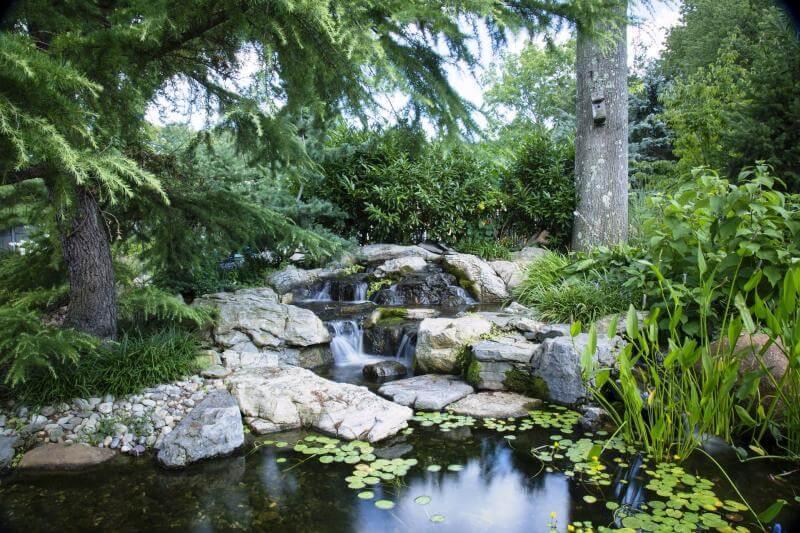 Teich in der Natur