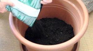 Kartoffelturm: Topf mit Erde füllen