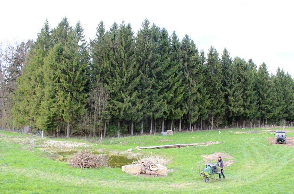 """Waldgartenstreifen in der """"Bio-Gärtnerei Birchhof"""""""