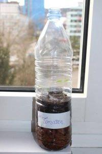 Pet-Flasche mit Sämlingen