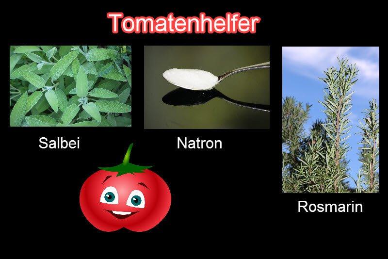 Tomatenhelfer: Salbei, Rosmarin und Natron