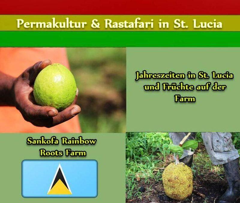 Jahreszeiten in St. Lucia und Früchte auf der Farm