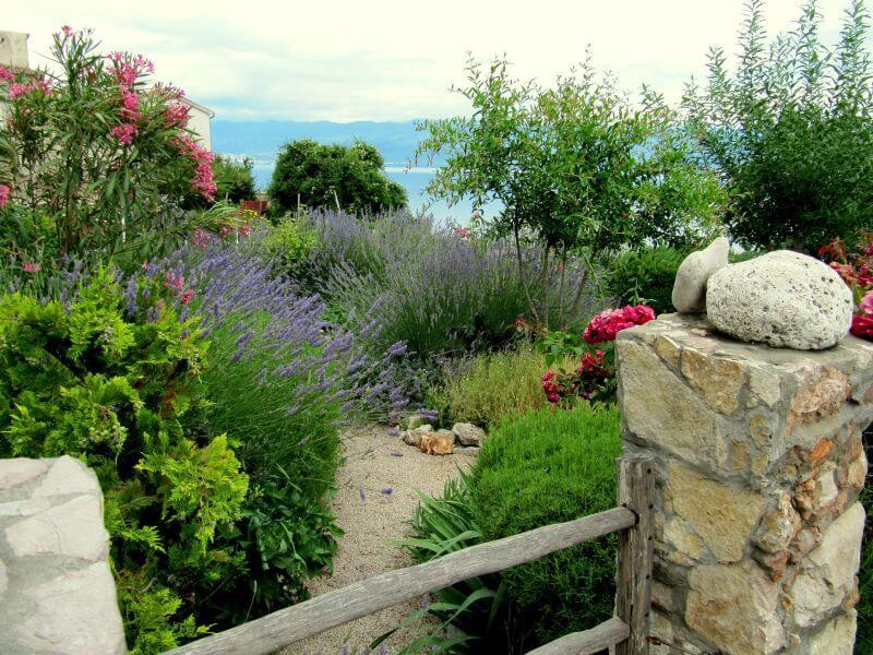 Rosmarin und Mittelmeerpflanzen